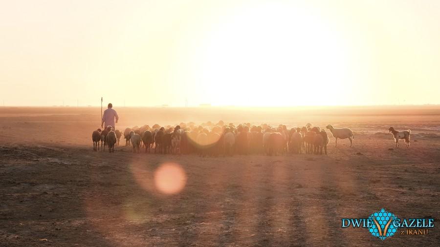 owce iran