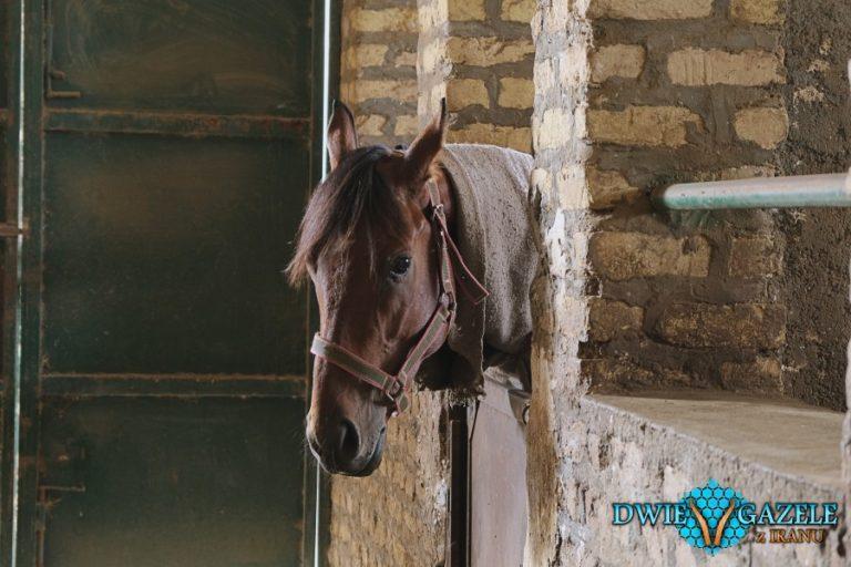 rajd konny w iranie